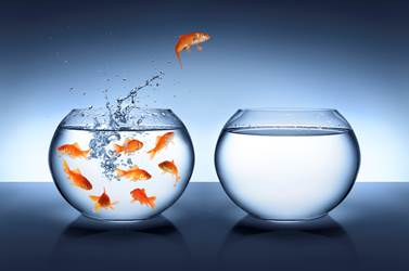 Management des organisations: Ce n'est pas une révolte chef, c'est une révolution!